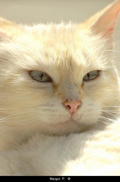 Qui naquit chat court après les souris.  Proverbe français
