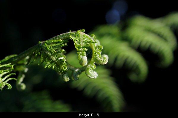 Nous croyons regarder la nature et c'est la nature qui nous regarde et nous imprègne. Christian Charrière