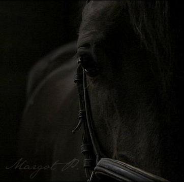 Mon néant, pour un cheval ! André Velter