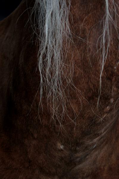 """""""La connaissance du naturel d'un cheval est un des premiers fondements de l'art de le monter, et tout homme de cheval en doit faire sa principale étude."""" F. Robichon (La Guérinière)"""