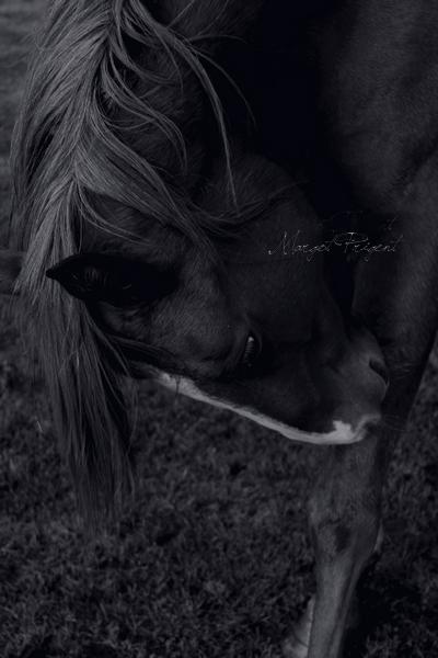 Et chaque instant passé à ses côtés, il me change un peu plus en cette cavalière que je ne connaissait pas. R. ♥
