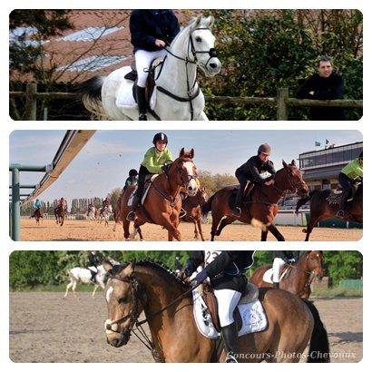 Blog de Concours-Photos-Chevauux