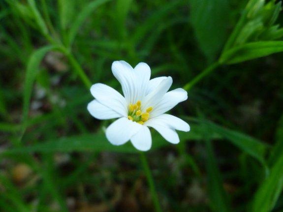 Ce n'est pas n'importe quelle végétation, c'est une Fleur.