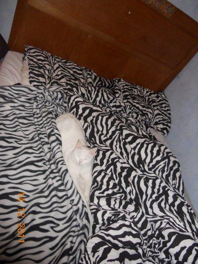 *****************moi et kitty*****************