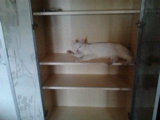 kitty dans l'aremoir