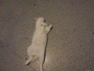 kitty fait le mort!!