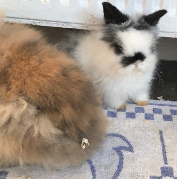 Lisy et Chipie