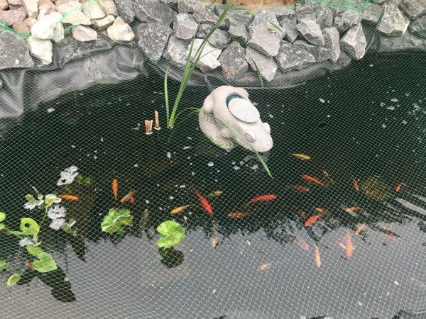 Mon étang.