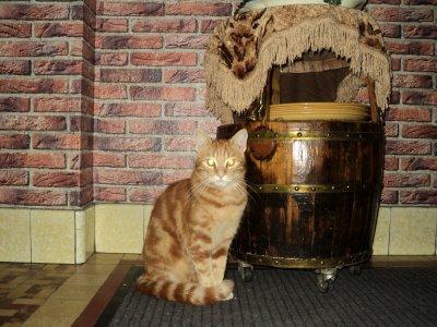 mon chat garfild