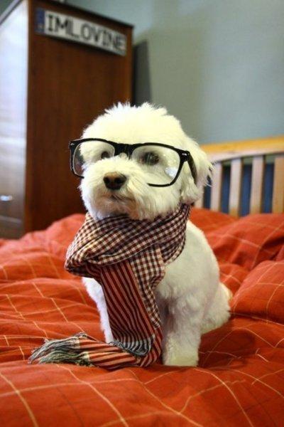 Si tu veux un ami fidèle , un conseil, achète un chien !