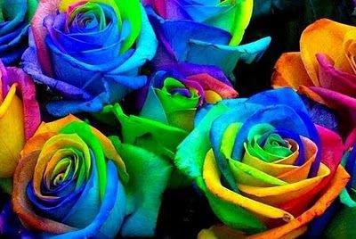 La Rose La Plus Foque Au Monde La Rose Multicolore Et Elle Existe