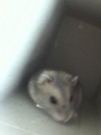 poterie ... le hamster trop mimi
