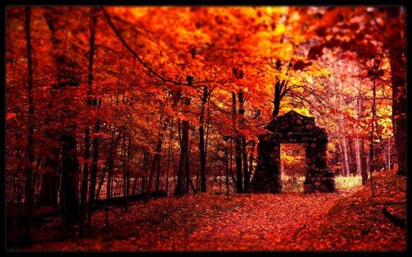 La saison que je préfère . . . L'automne ♥