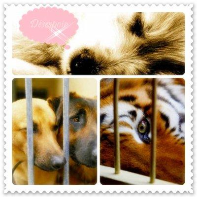 Etre aveugle face aux animaux maltraîtés ? . . . Moi non !