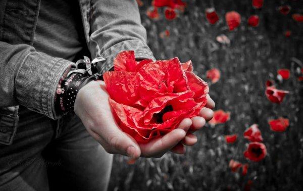 Le coeur est comme une fleur ♥