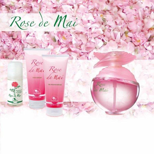 """"""" Rose de Mai """""""