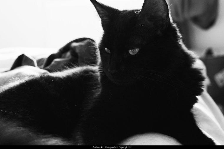 Black Cat is mine.