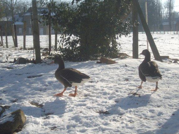 mon parc sous la neige et mare geler
