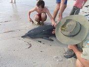 Australie : un père et son fils sauvent un dauphin échoué !