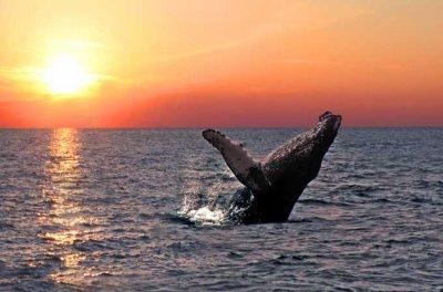 Islande : Assistez au bal des baleines