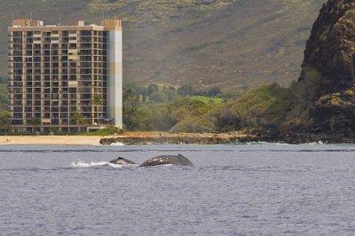 Baleines a New York