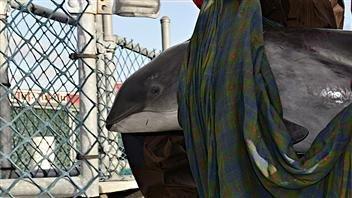 Le marsouin traité à l'aquarium de Vancouver est décédé d'une hydrocéphalie...