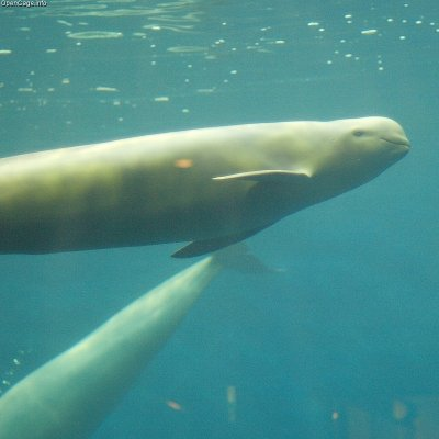 La population des dauphins du Yangtsé diminue de 80% en 30 ans...