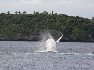 Nouvelle-Calédonie : 1ère édition de la Fête de la Baleine !