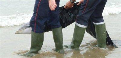 Pénestin : un dauphin s'échoue sur la plage de la mine d'Or...
