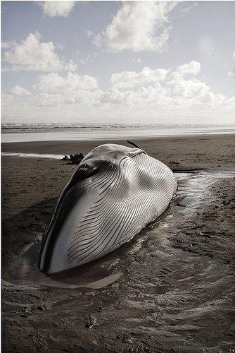 Hommage de centaines de Vietnamiens à une baleine morte...