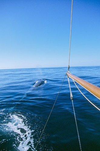 Collision avec une baleine : 2 hommes et une femme débarqués à Nuku Hiva en bonne santé..