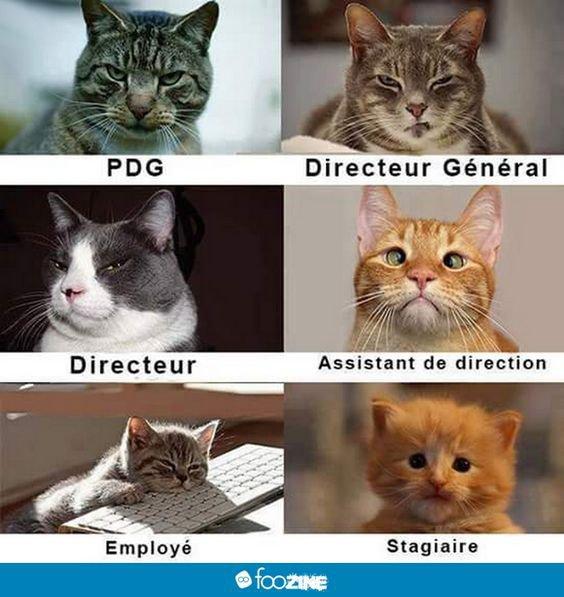 Quel est ton poste?