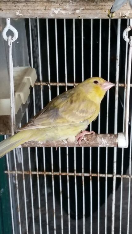Nouvel oiseau