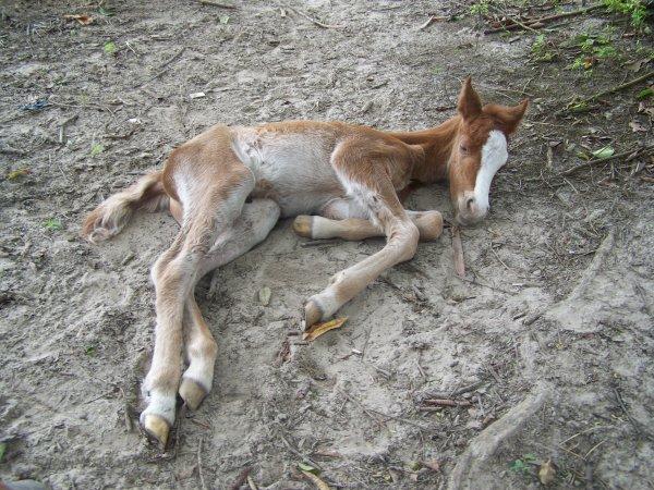 6 avril 2013 : naissance de DOLCE AMORE