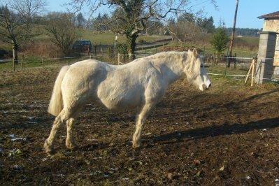 les chevaux de ma copine
