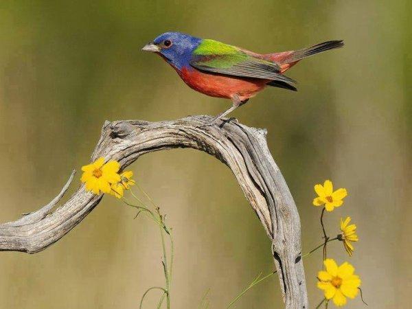 Les petits oiseaux exotiques sont souvent tr s riches en for Les petits oiseaux
