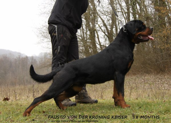 Fausto Von Der Kroning Keiser  (Balco aus der Espenstätte x Oxa Vom Calibra)