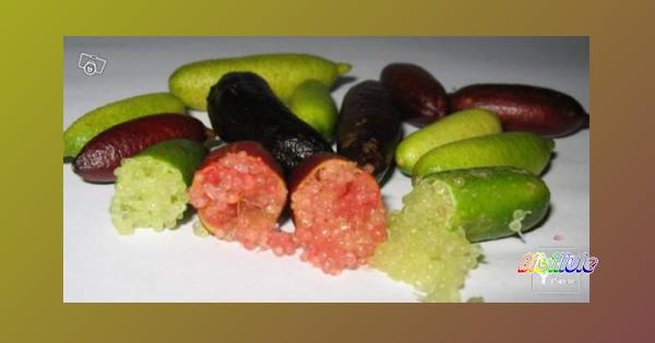 citron caviar réponse au cékoiça
