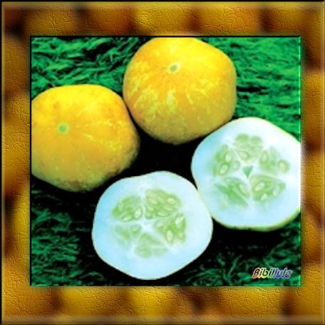 Ce n'est pas le cocombre masqué mais le concombre citron