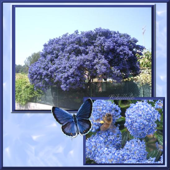 Un peu de bleu dans le jardin............
