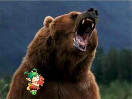 Un ours mal léché