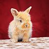 i-want-a-bunny
