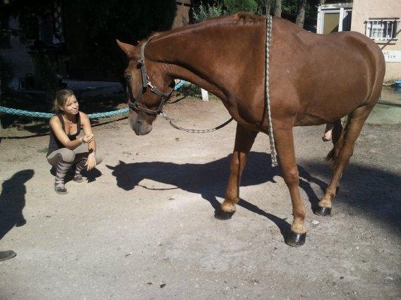 .  AUGUST  .                                                C' est un élement capital dans ma vie , un amour de cheval ....
