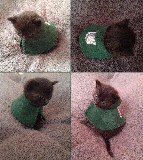 Trop meugnon le cosplay pour chat !! :3
