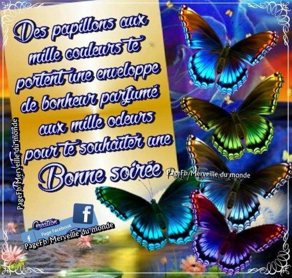 papillion du soir espoir!!!!!!!!!!!!!!!!!