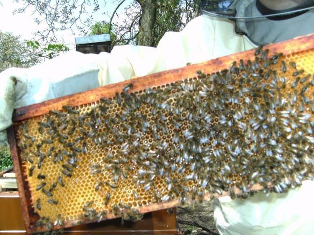 l abeille te fait vivre alors respecte la et tu vivra