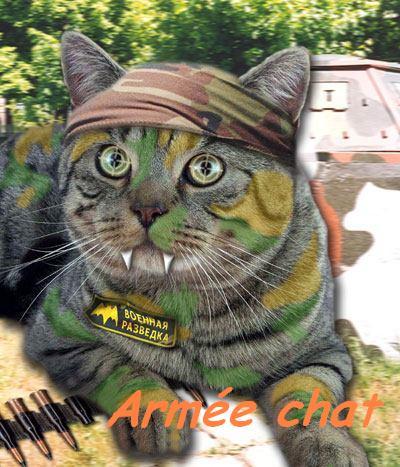 armée chat