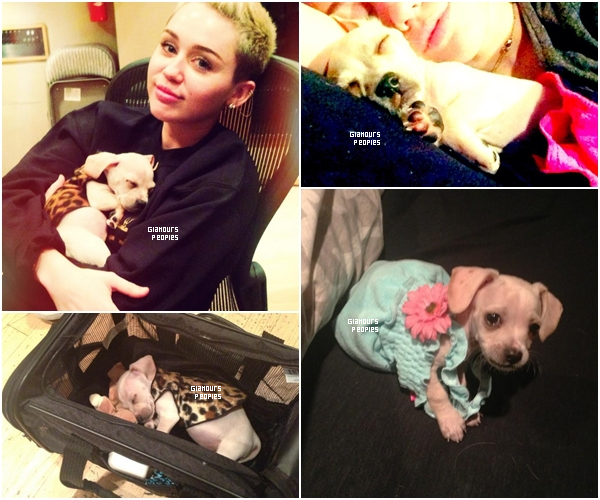 ᅠ Je vous présente Bean le nouveau chiot de la chanteuse/actrice Miley Cyrus ᅠ