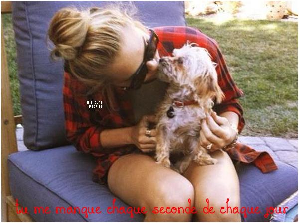 ᅠ Le saviez-vous ? : Miley Cyrus a perdu sa petite chienne Lila a cause de son chien Ziggy ᅠ