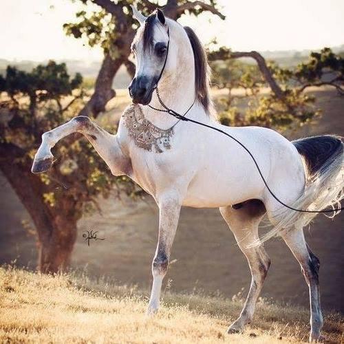 Ma matinée au cheval <3 n°3 :)
